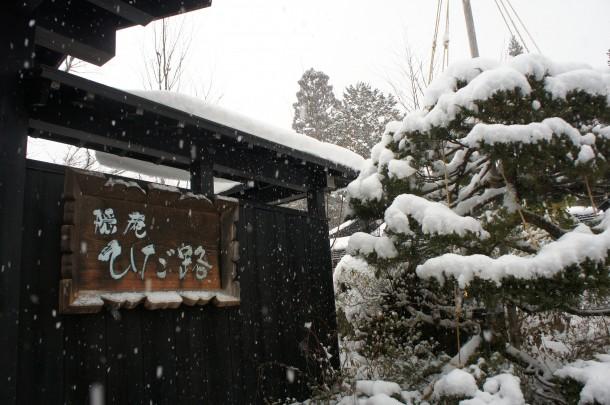 良い雪降ってます。