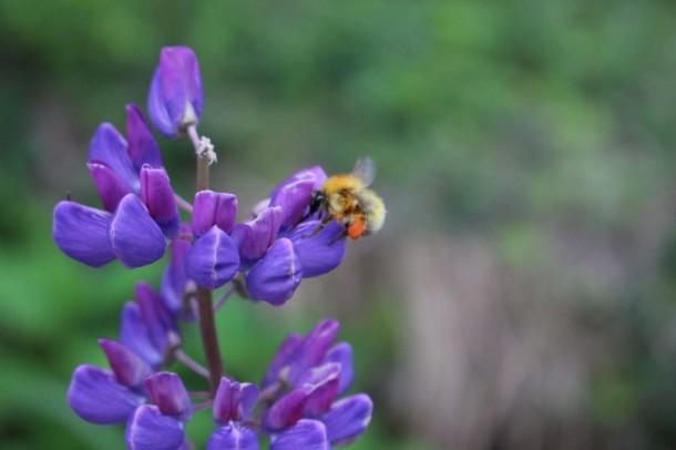 花と蜜蜂。