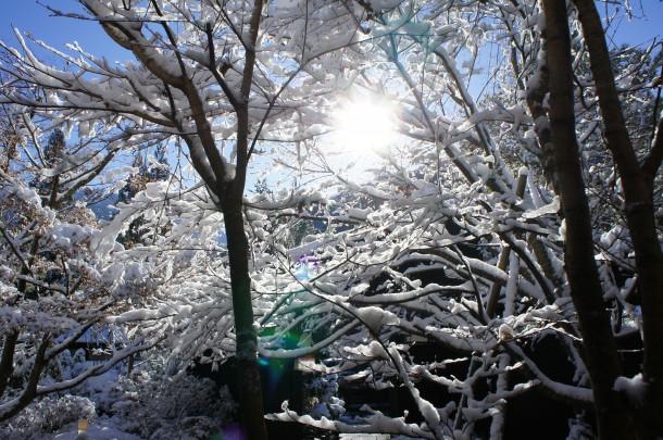 雪色に染まりました。