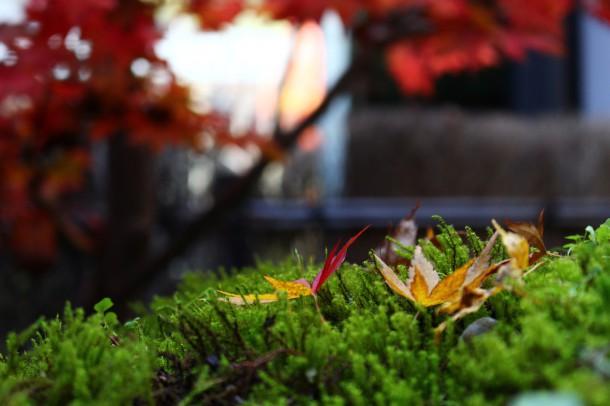 秋も見納め。
