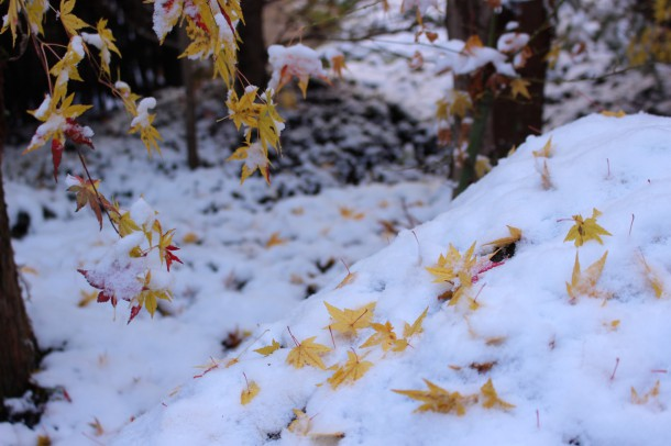 秋と冬の重ね重ね。