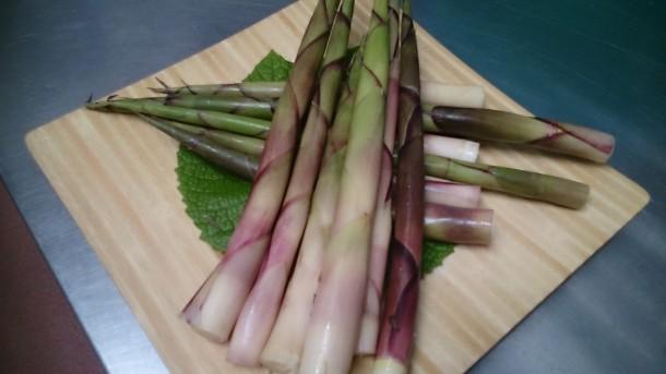根曲り竹 収穫です!!
