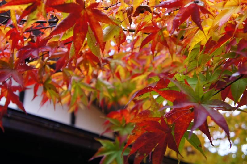 秋の小雨。