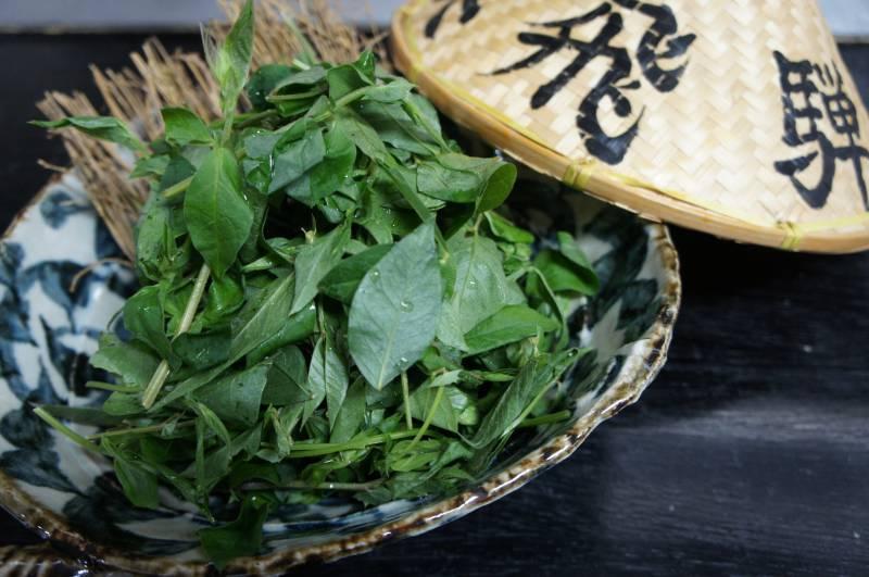 飛騨の郷土野菜「あずき菜」