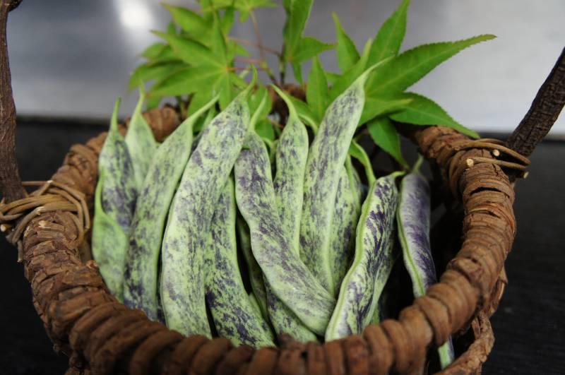 飛騨伝統野菜「縞ささげ」