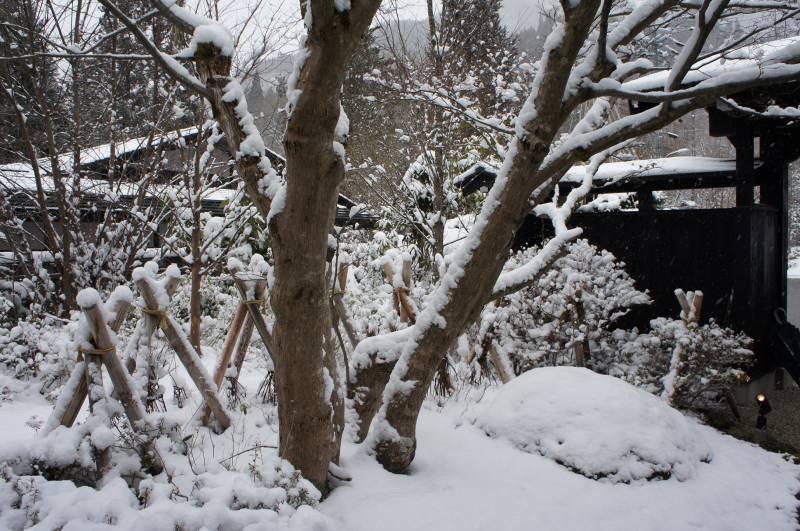 待望の降雪