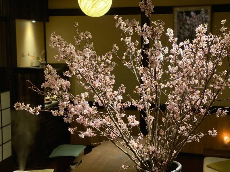 桜満開♪ ひだ路の夜桜