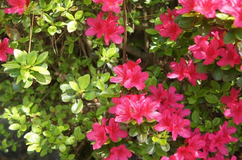 春の開花情報、続報です