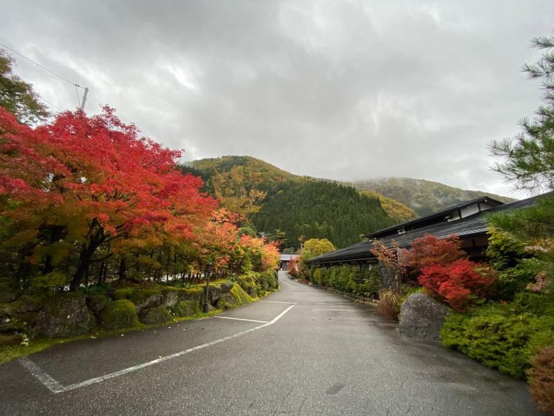敷地の紅葉も見頃に。