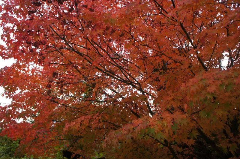 奥飛騨の紅葉、今がピークです!