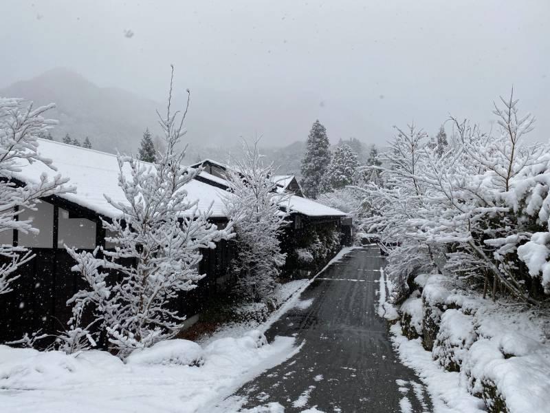 本格的な雪になりました。