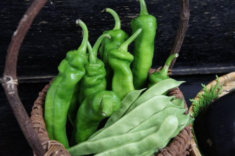 旬の夏野菜たちをご紹介します