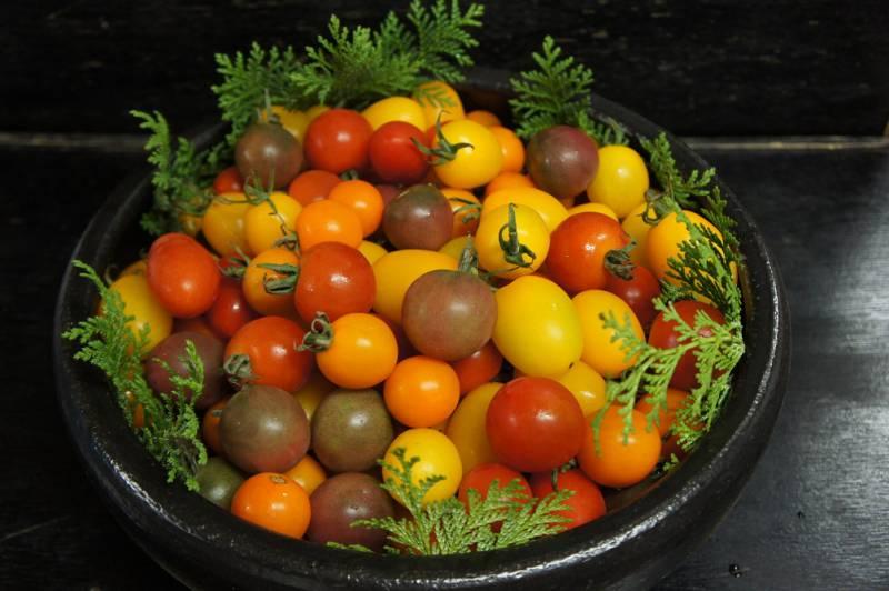 元気いっぱいのミニトマトです!