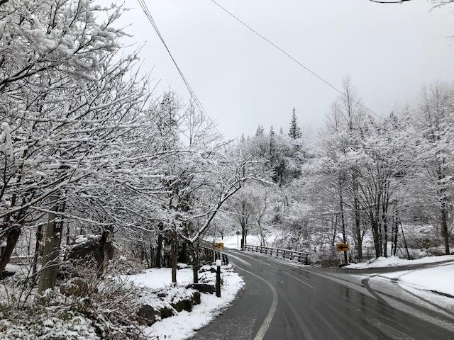 本日も雪です。